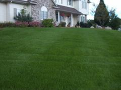 Lawn Fertilization and Weed Control