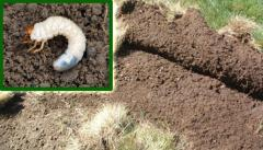 Total Lawn Insect Control
