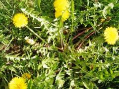 Grassy Weed Control