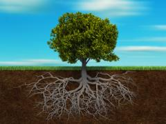 Root Feeding