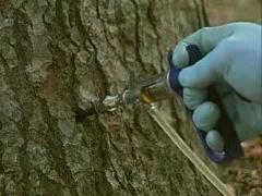 Specialty Tree Injections