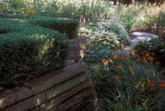 Top Quality Plantings