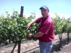 Vineyard Design, Installation and Management