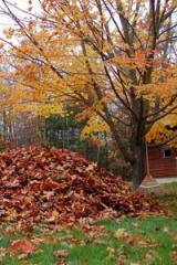 Leaf Removal, Fall & Spring Cleanup Services