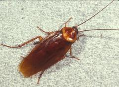 Cockroaches Control