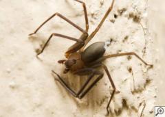 Spider Extermination