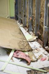 Mold Removal & Mold Remediation Services