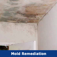 Mold Inspections & Safe Removal
