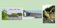Dinner w/Dolphins/Manatees/Alligators Tour