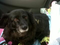 Geriatric & Senior Pet Care
