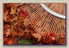 Fall & Clean-Up Services