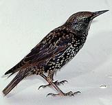 Pest Bird Solutions