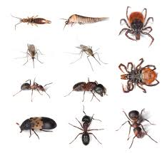 Pest Treatments