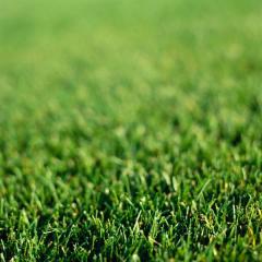 Laying Sod/Seeding Lawns