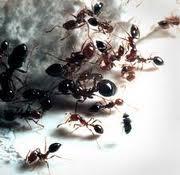Ant Control Service
