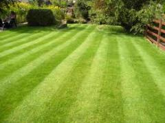 Lawn Care and Disease Control
