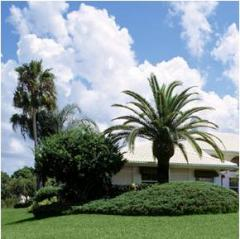 Tree, Palm & Shrub Care