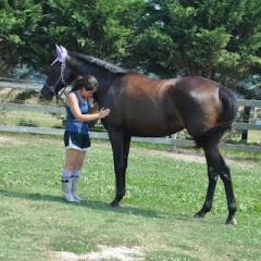 Horseback Riding Private Lessons