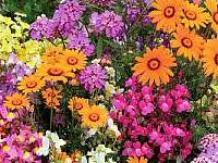 Plantings-Tree; Shrubs; Perennials / Annuals