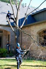 Three-stage tree removal