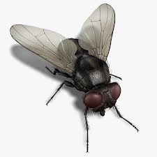 Flies Exrermination