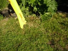 Customized Lawn Treatment Programs
