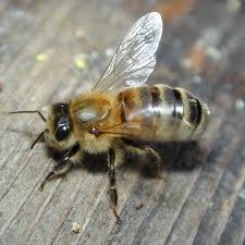 Bees Extermination