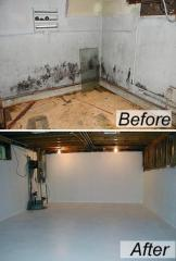 Basement/Crawlspace Mold Removal