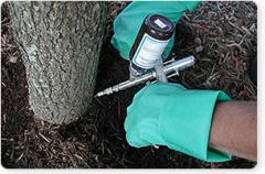 Tree and Shrub Injections