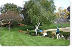 Tree and Shrub Care Services