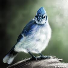 Birds Scaring Away