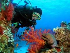 Scuba Diving Red Sea