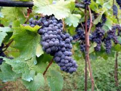 Vineyard Insurance