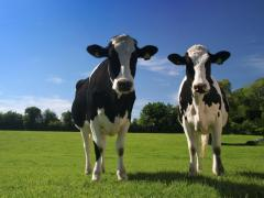 Dairy Farming Insurance