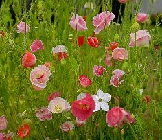 Pet Memorial Gardens