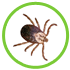 Fleas & Ticks in Dogs and Cats