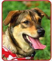 Customized Training Humane, Non-physical, Natural Dog Training Methods