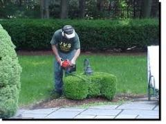 Shrub And Ornamental Services