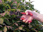 Plant Pruning