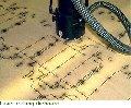 Laser Cut Dieboards