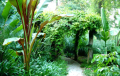 Tropical Plants and Trees
