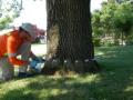 Rhizanova Tree Injectable