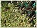 JLS Lawn Services