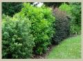 JLS Shrub and Tree Care