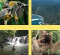Osa/Corcovado Corcovado National Park Tour
