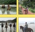 Manuel Antonio Jungle Horseback Riding to Waterfalls Tour