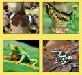 Sarapiquí Rainforest Butterfly Garden Tour