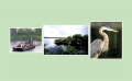 Greatest Endangered Wildlife & Airboat Experience Tour