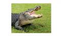 Gatorland Tour