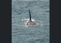 Ka'anapali / Ma'alaea Whale Watching Tours